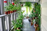 Устраиваем цветник на лоджии или балконе собственными руками
