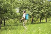 Как правильно опрыскивать плодовые деревья