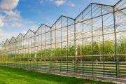 Как построить голландскую теплицу на собственном участке