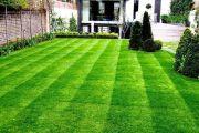 Партерный газон на собственном участке своими руками
