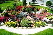 Альпийская горка, цветы и растения в ландшафтном дизайне